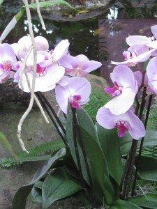 img_2658-225x300 botanique dans Expositions : Peinture - Sculpture - autres