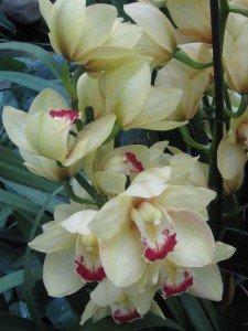 img_2671-225x300 plante