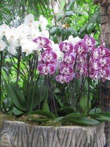 img_2714-225x300 plante