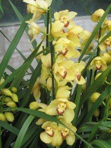 Au Jardin des Plantes de Paris : Mille et Une Orchidées (1) dans Galerie de photos img_2716-225x300